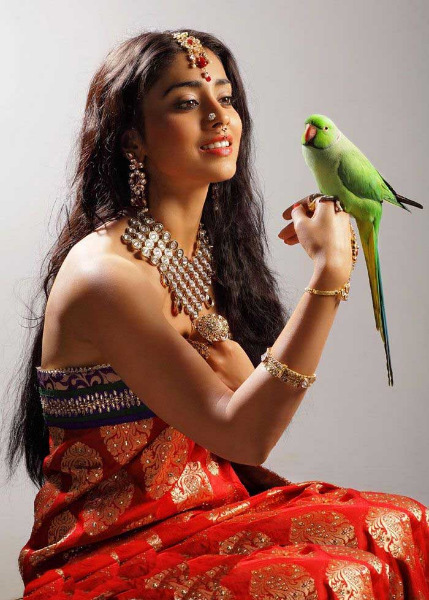shriya latest photo gallery 4 Shriya Latest Hot Photo Gallery