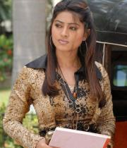 sneha-photo-shoot-photos-12
